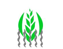 Séchage des céréales